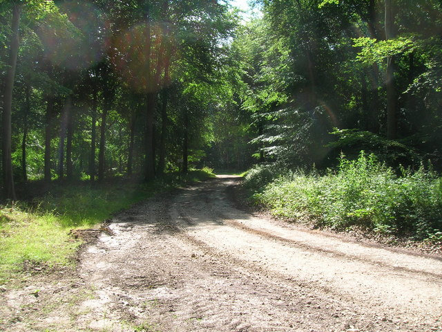 Private track in Rowgate Plantation