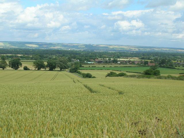 Farmland, Thorpe Bassett Wold