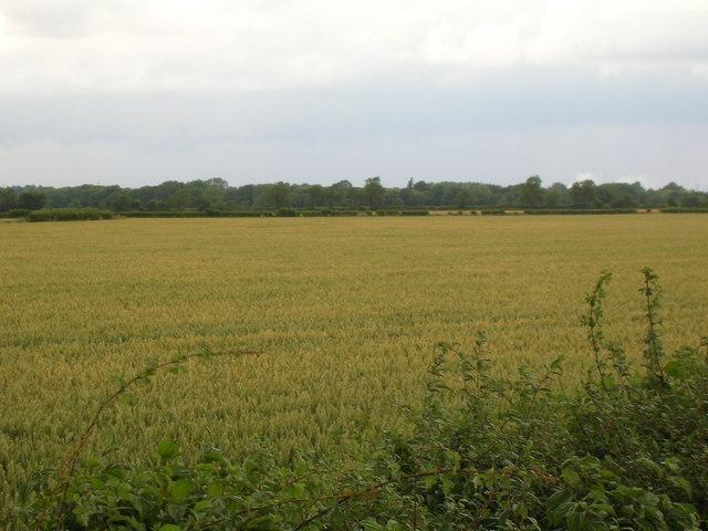 Farmland off Brambling Fields Lane