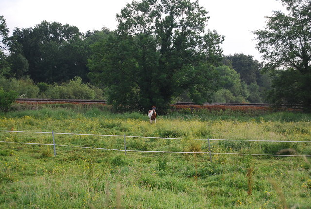 Horse by the railway line