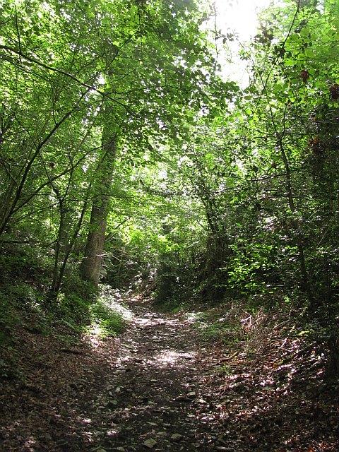 Old road, Harton Wood