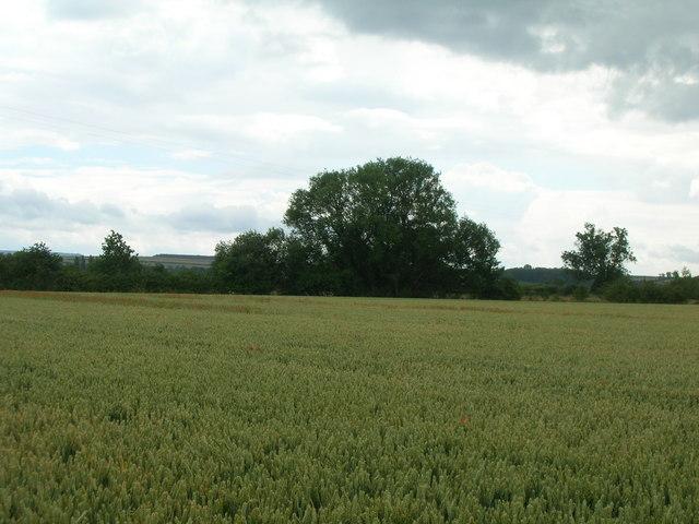 Farmland near Whinflower Hall
