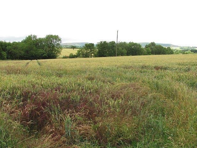 Arable land, Wolverton