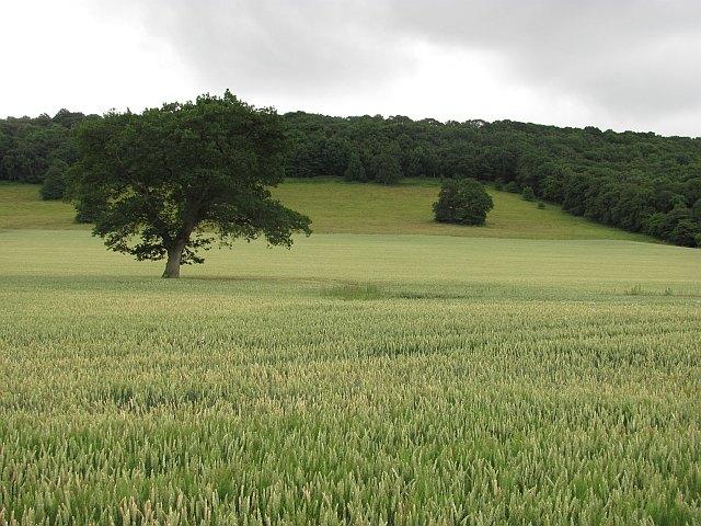 Wenlock Edge, Wolverton