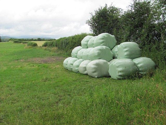 Round bale silage, Wolverton