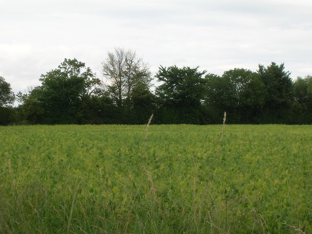 Farmland near Rillington