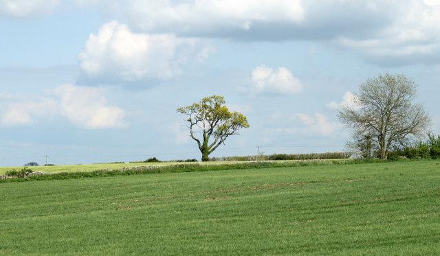 2010 : Fields and trees near The Warren
