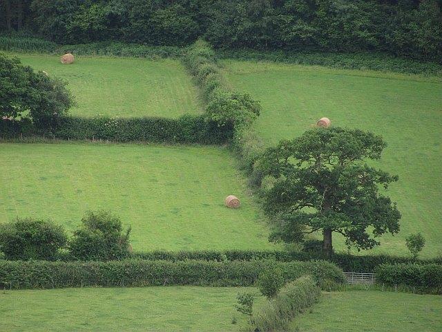 Fields, Hope Dale
