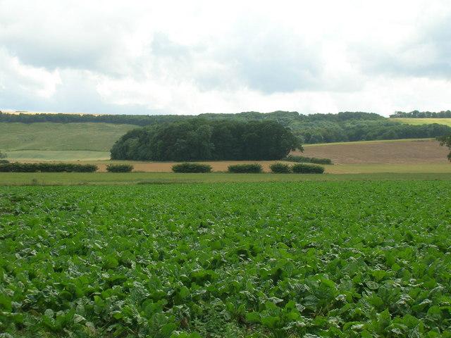 Farmland, Thorpe Bassett