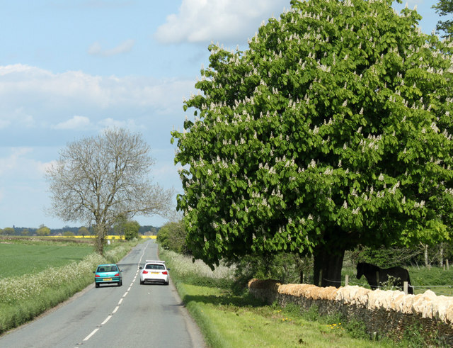 2010 : Minor road and horse chestnut in flower
