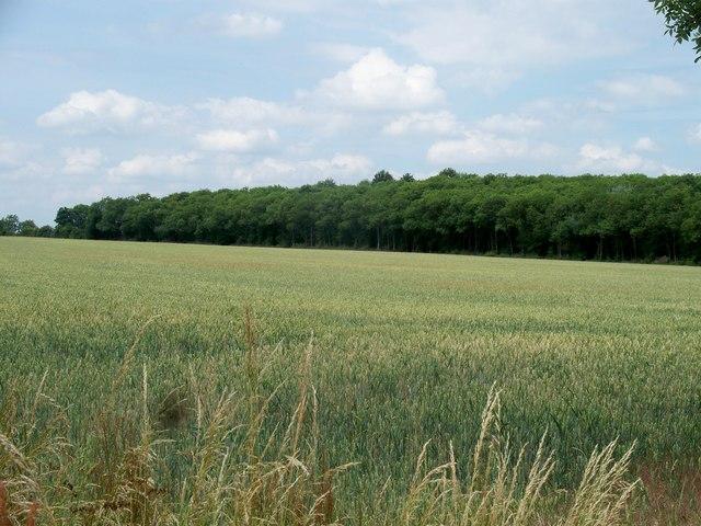 Smith Hill Plantation