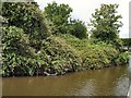 SU8602 : Bushes by Chichester Canal by Paul Gillett