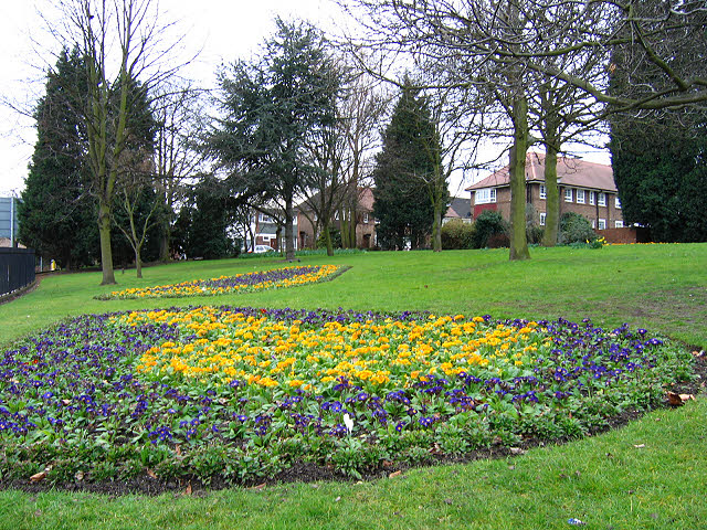 Spring flowers in St Mary's churchyard
