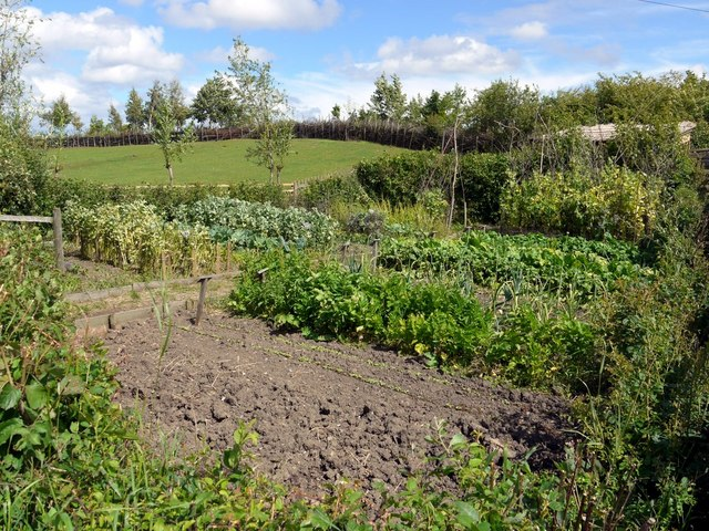 Anglo-Saxon Vegetable Garden, Bede's World