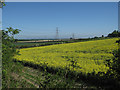 TL5652 : Rape field by Fleam Dyke by Hugh Venables
