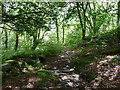 SH7955 : Woodland path to Llyn Elsi : Week 30