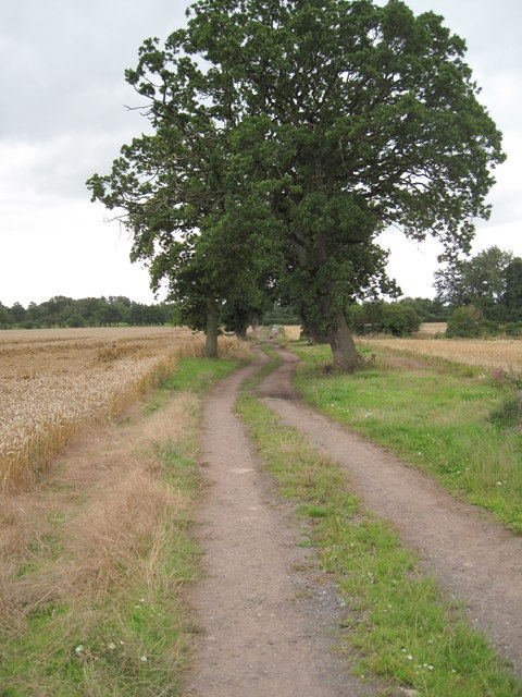 Farm Track south of Guilden Sutton