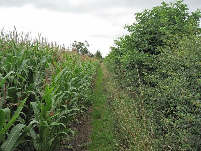 Footpath beside the Sweetcorn