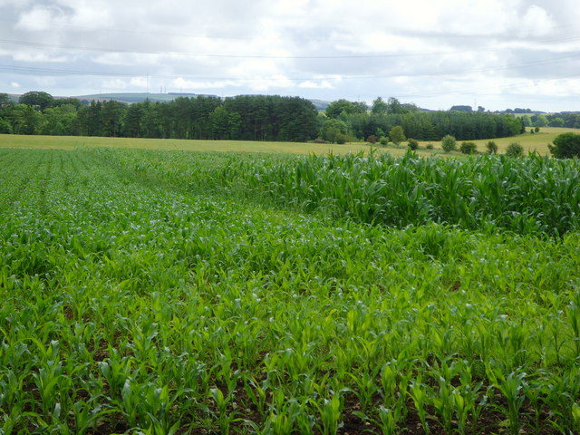An a-maize-ing sight in Aberdeenshire!