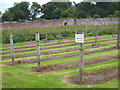 SX0471 : Fruit bushes in the kitchen garden at Pencarrow by Rod Allday