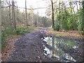 SU9493 : Bridleway in Great Beards Wood by michael