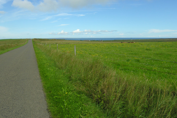 Shapinsay, fence line and meadow