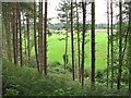 SJ5468 : Conifers, Delamere by Richard Webb