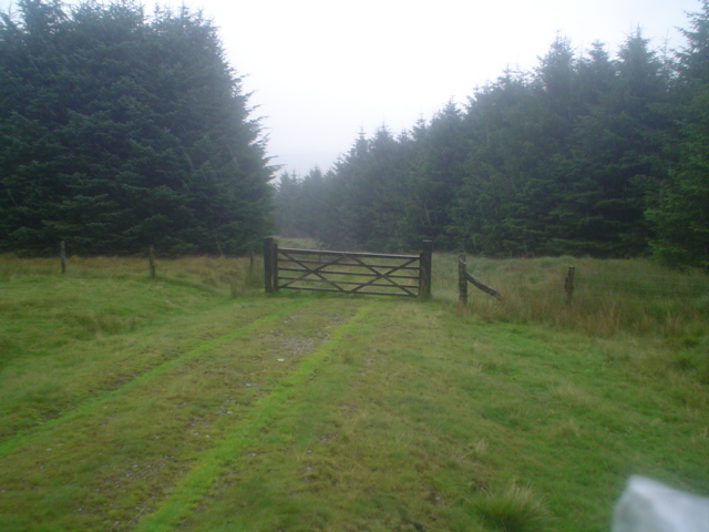 Gate for track from open hill into conifer plantation