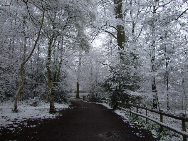 Black Park in the snow