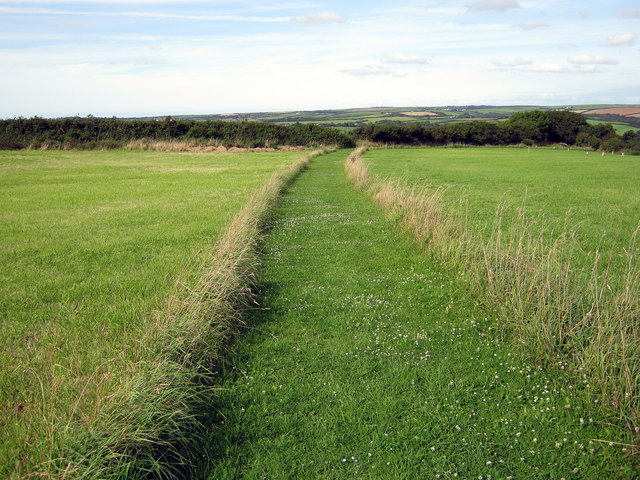 Footpath across a meadow