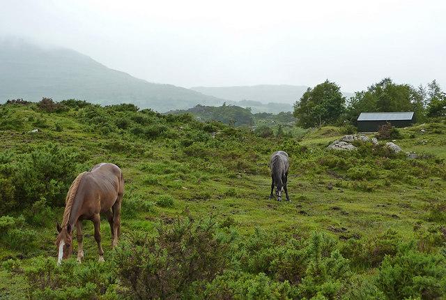 Horses, Gortnagappul