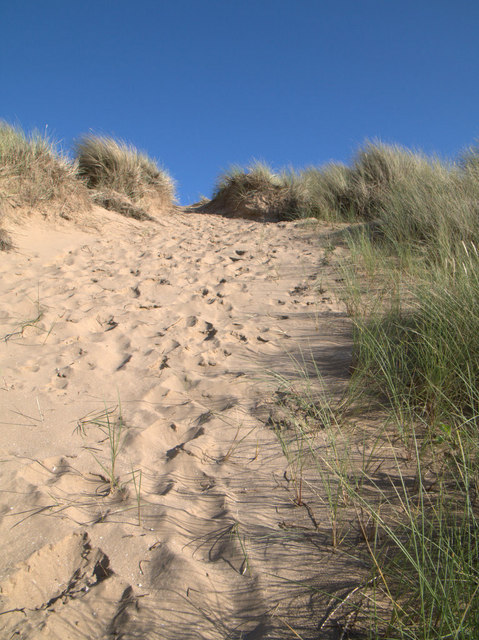 Marram and dune ridge