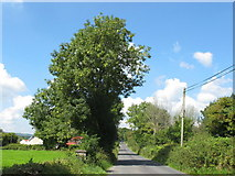 R6362 : Ash tree at Cottage Cross by David Hawgood