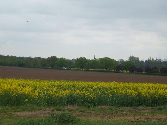 Fields towards the A63, Monk Fryston