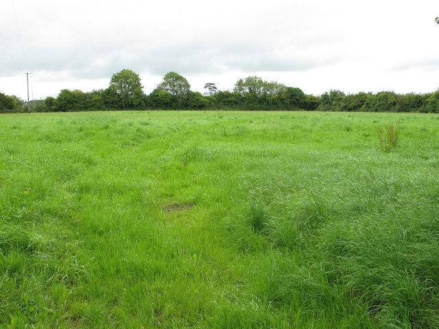 grass field  u00a9 david hawgood    geograph ireland