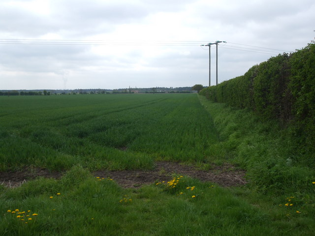 Fields on Cawood Common