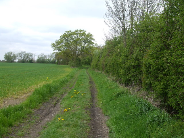 Farm Track near Wistow