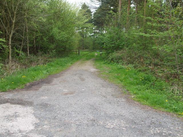 Track in Bishop Wood