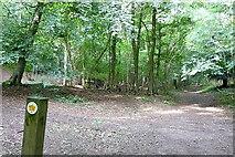 SU8789 : Footpath in Bloom Wood by Graham Horn