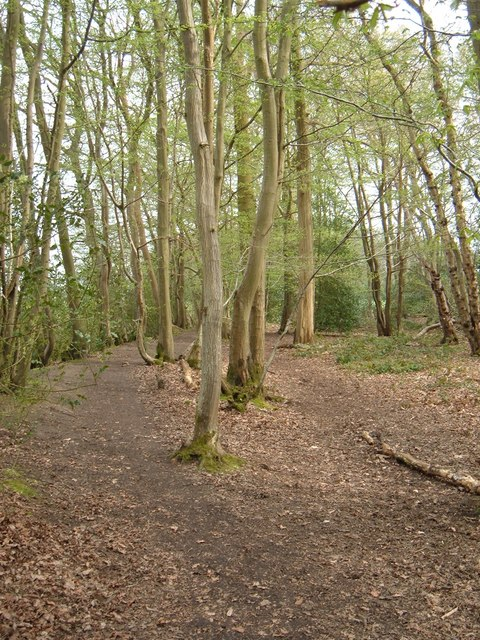 Footpath round the west edge of Tyrrel's Wood