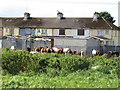 R5758 : Horses behind council houses, Limerick by David Hawgood
