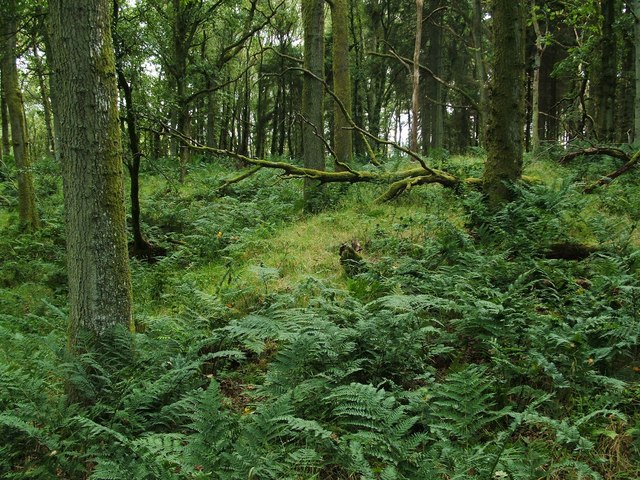 Earthworks in Knockinhaglish Wood