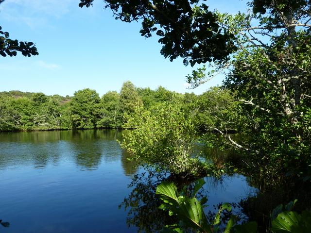 Loch-an-treel