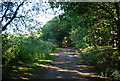 TQ0242 : Downs Link / Wey South Path by N Chadwick