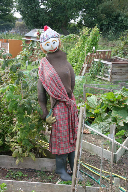 Scarecrow on the Moneyfields Allotments