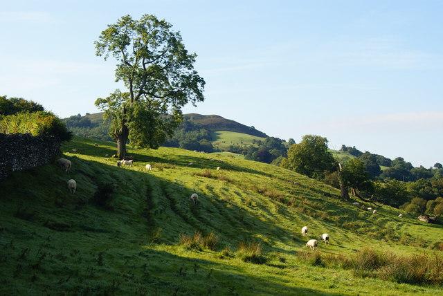 Tree at Low Wray, Cumbria