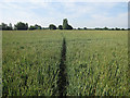 TL5971 : Footpath through the wheat by Hugh Venables