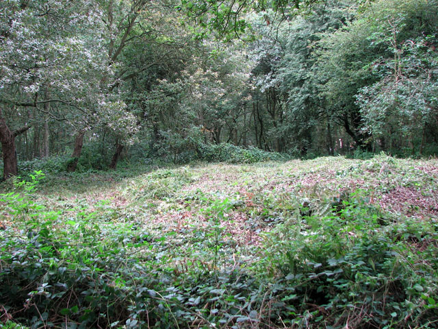 The site of St William's chapel in Mousehold Heath