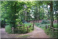 TQ0148 : Entrance to Chantry Wood by Nigel Chadwick