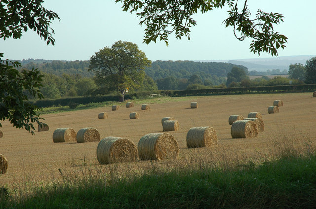 Hay Rolls in mid September
